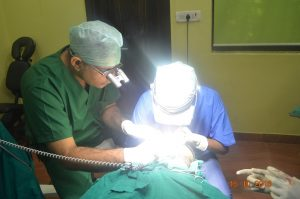 hair transplant training courses in india